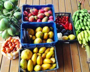 costa-rica-fresh-food