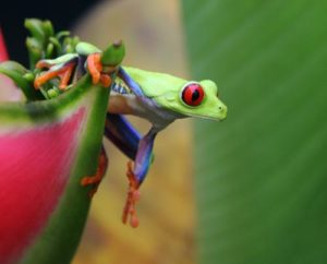 costa-rican-wildlife